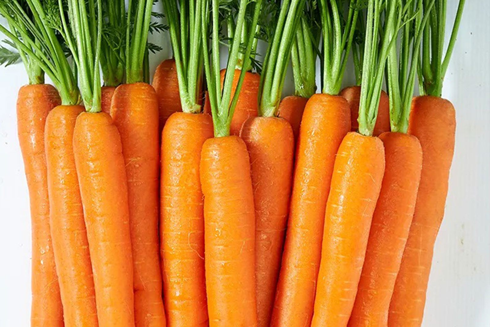 Carrot day featuring carrots (with stem)