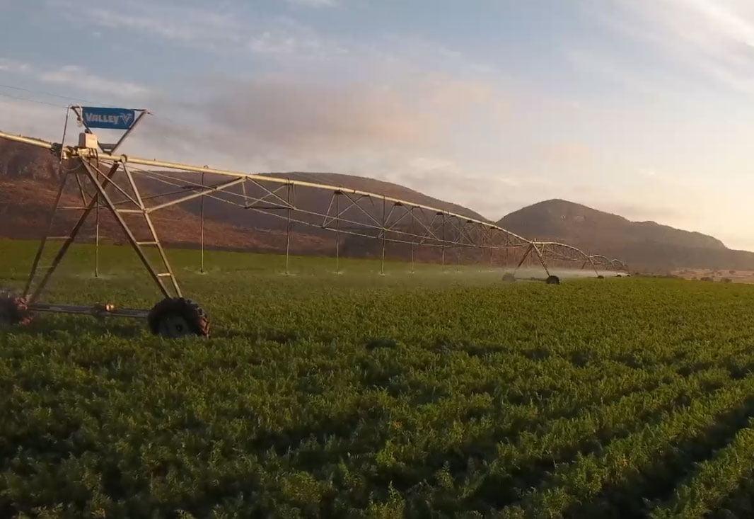 Farm drip irrigation